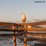 Plages du Chili, océan et surf : virée à Maitencillo et Zapallar