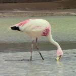 Que voir que faire à San Pedro de Atacama ?