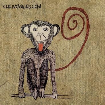 singe dessin