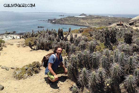 cactus ile de damas