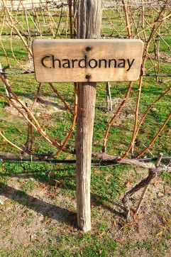 vin chilien