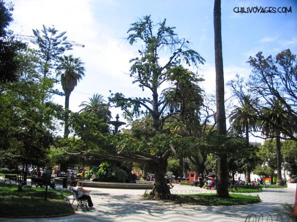 palmiers Valparaiso