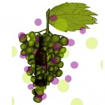 Carménère, comment ce cépage renaît dans le vin chilien ?