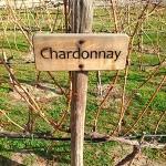 La route du vin chilien, visite du vignoble Concha y Toro